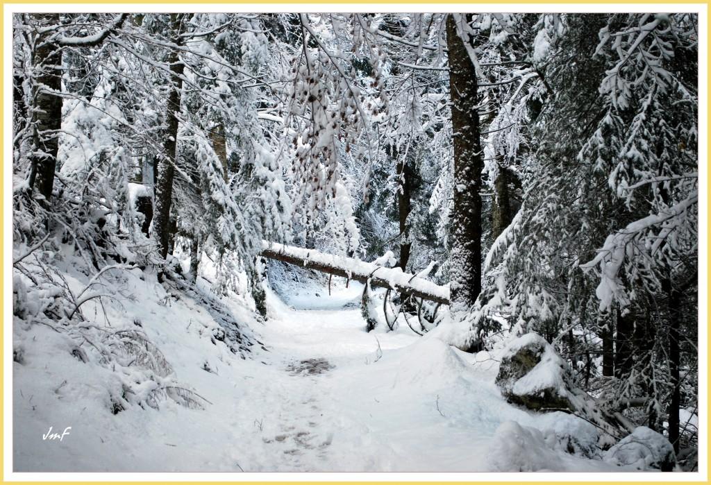 la forêt bien enneigée