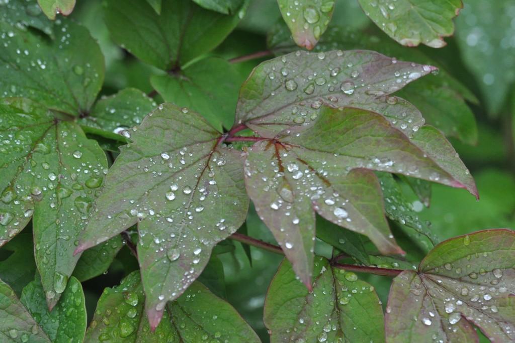 Perles de pluie ... mg