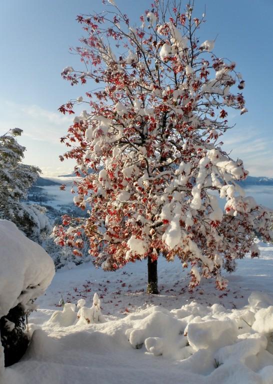 tolvon  en neige