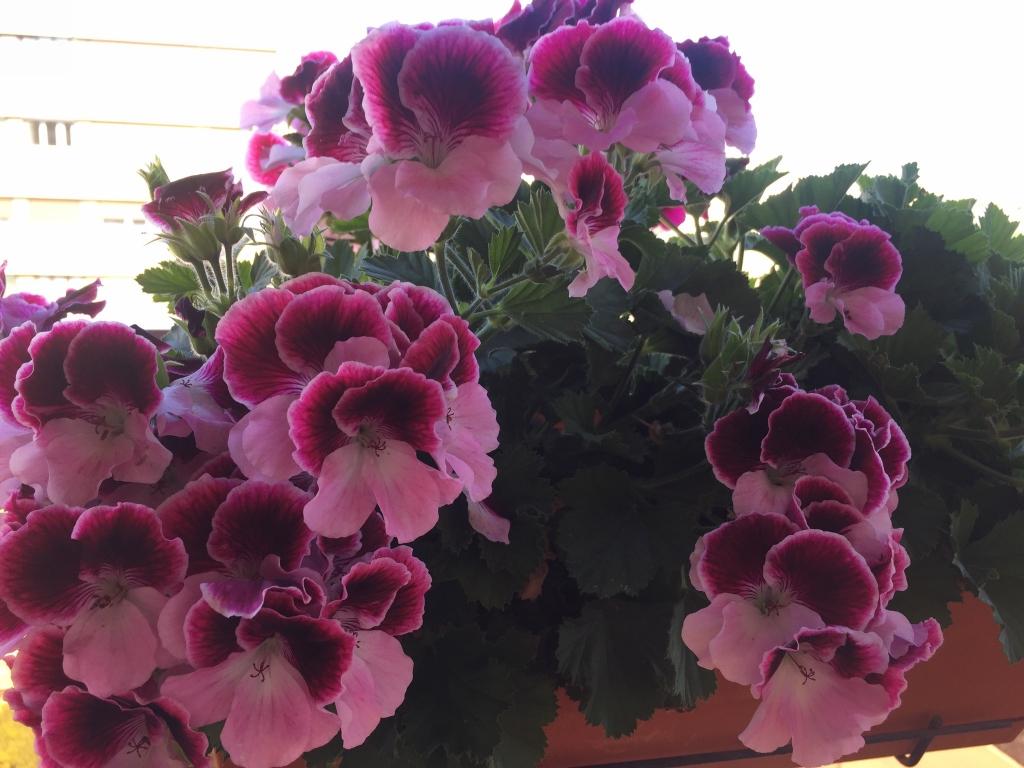 fleurs...
