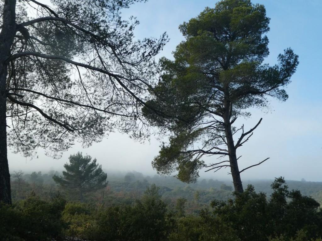 leger brouillard dans les bois de Peyrolles BDR