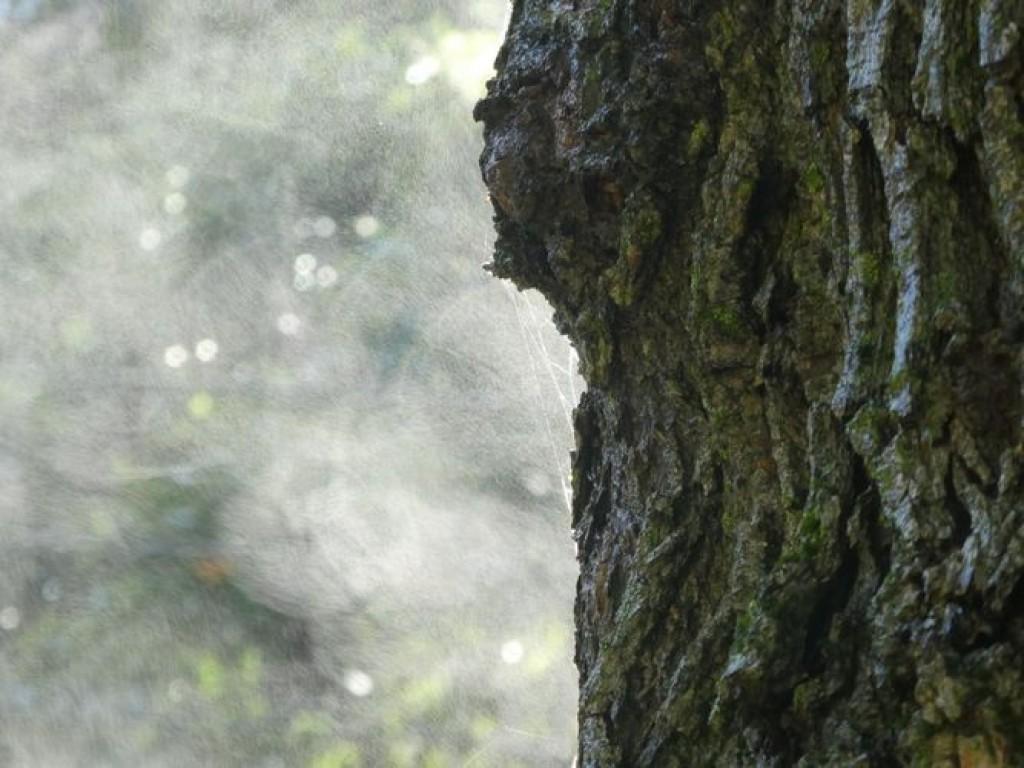 effet du soleil sur un tronc trempé de pluie