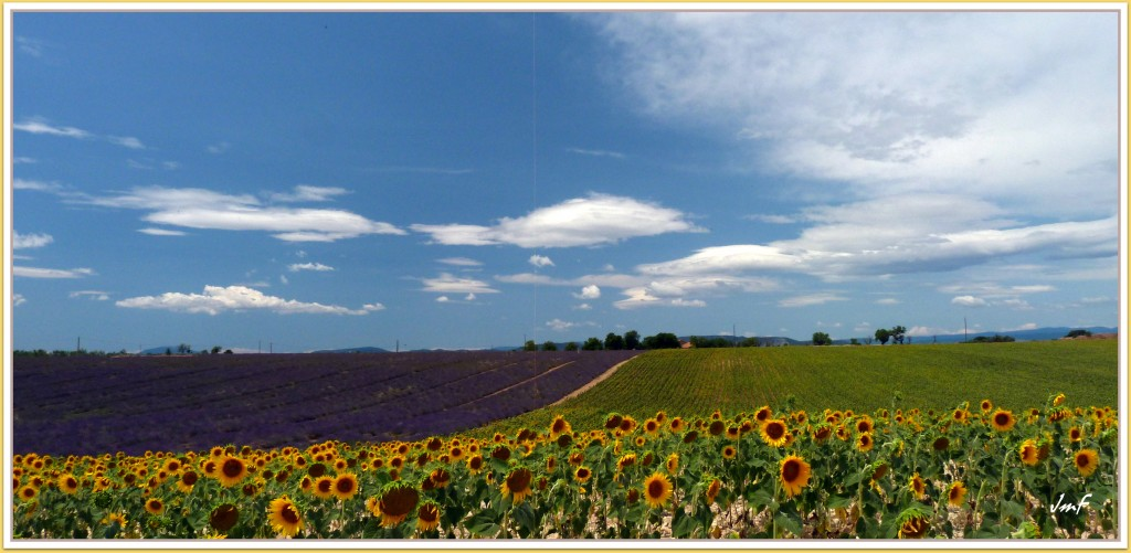 Provence fleurie
