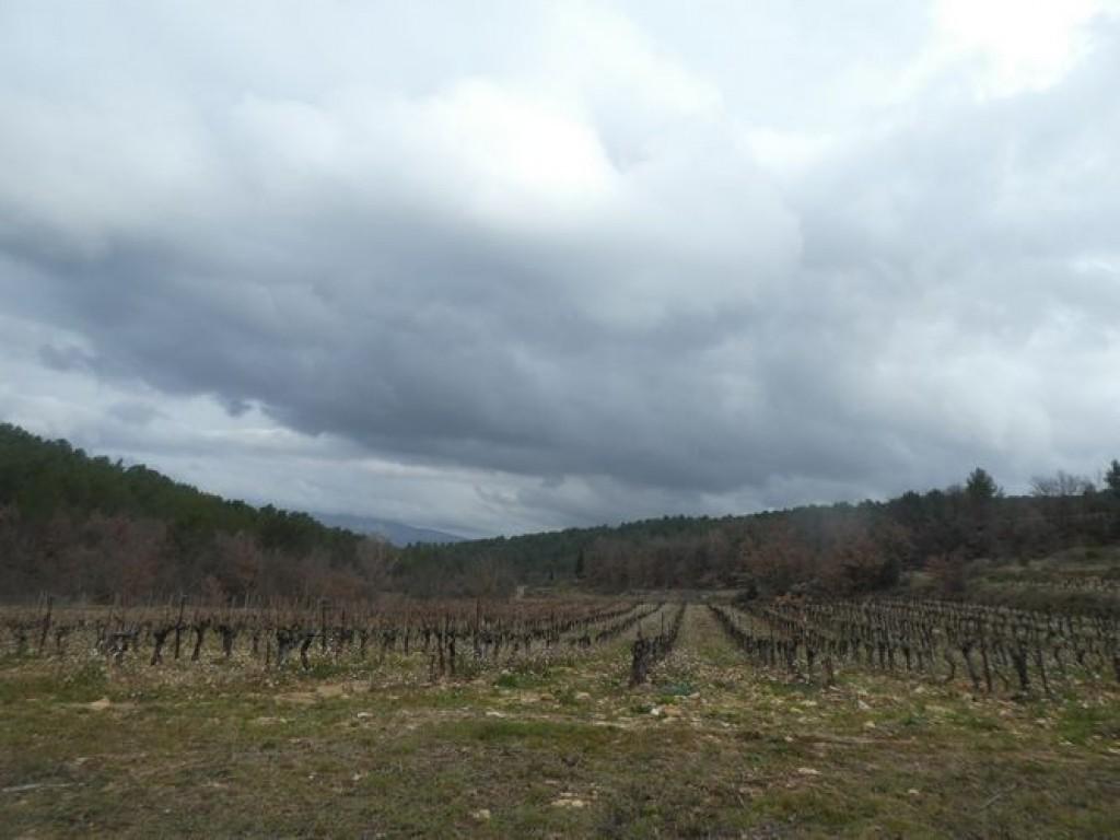 nuages sur les vignes