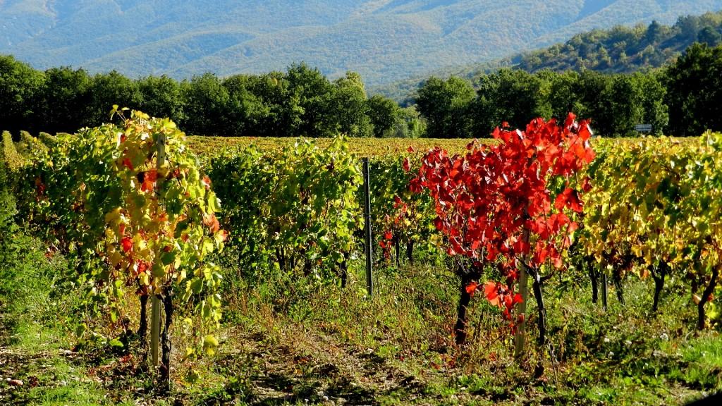 Photos m t o sur paris le premier site m t o pour paris - L automne et ses couleurs ...