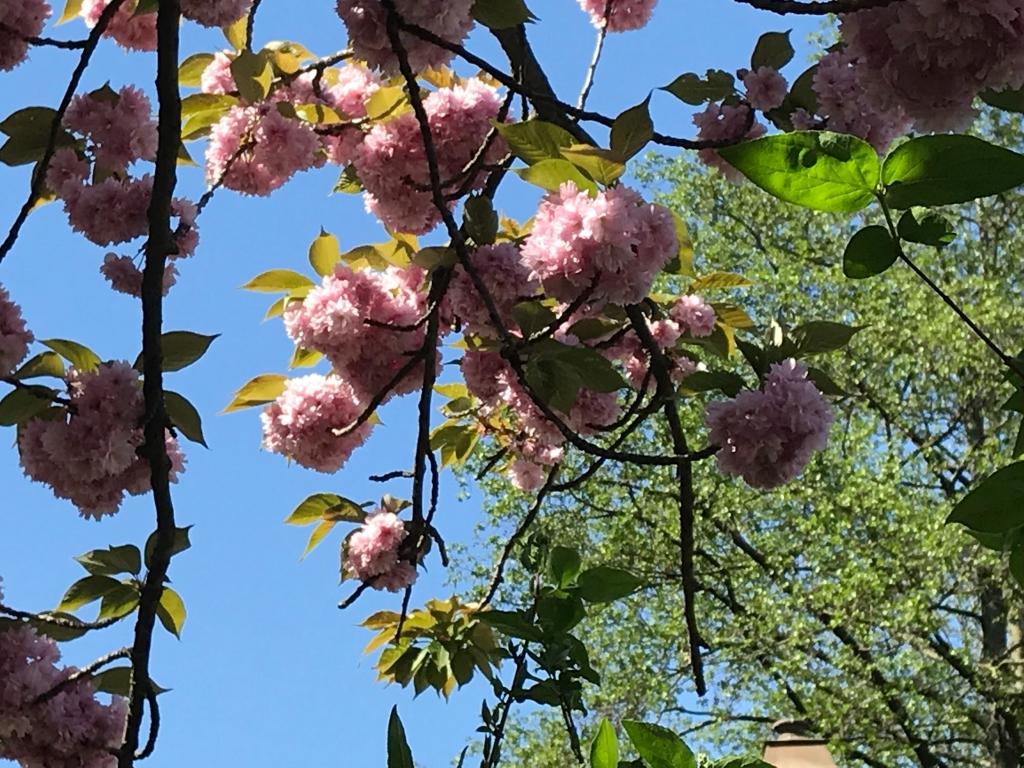 Éclosion de printemps sous un soleil d'été