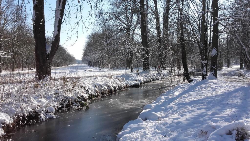 Neige dans le bois de Vincennes