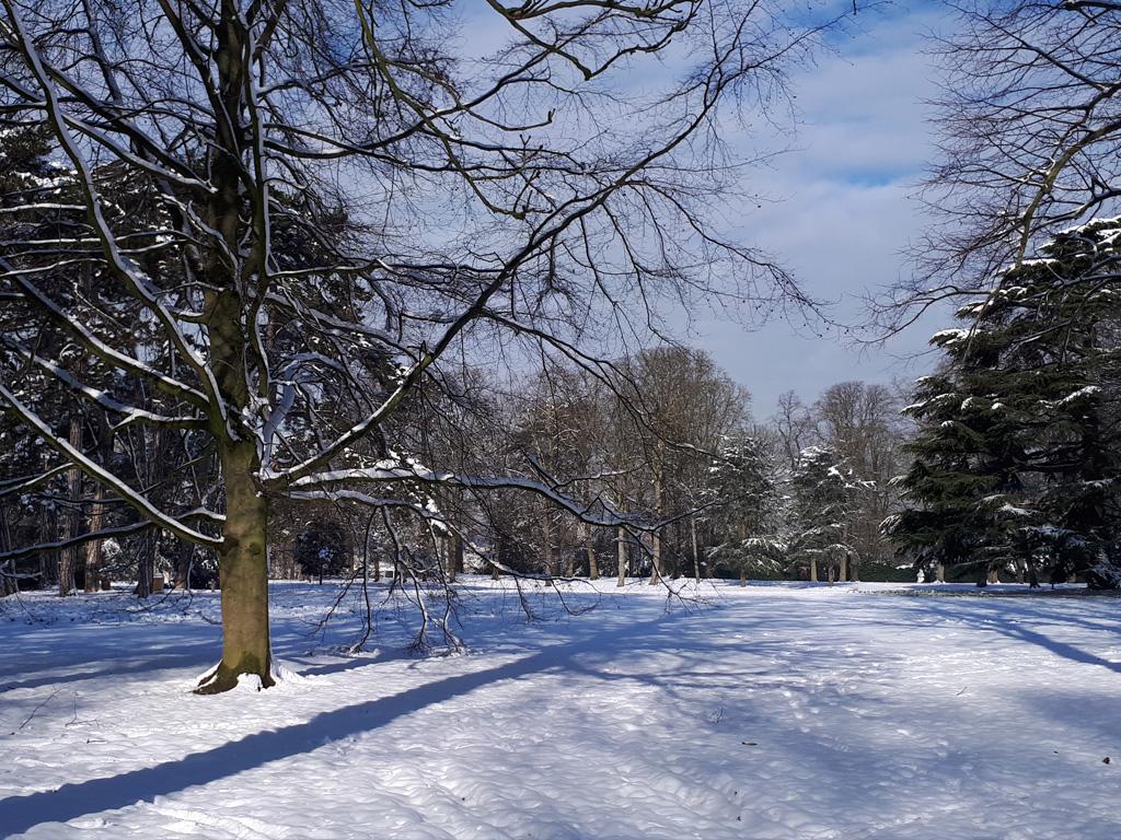 Roseraie sous la neige