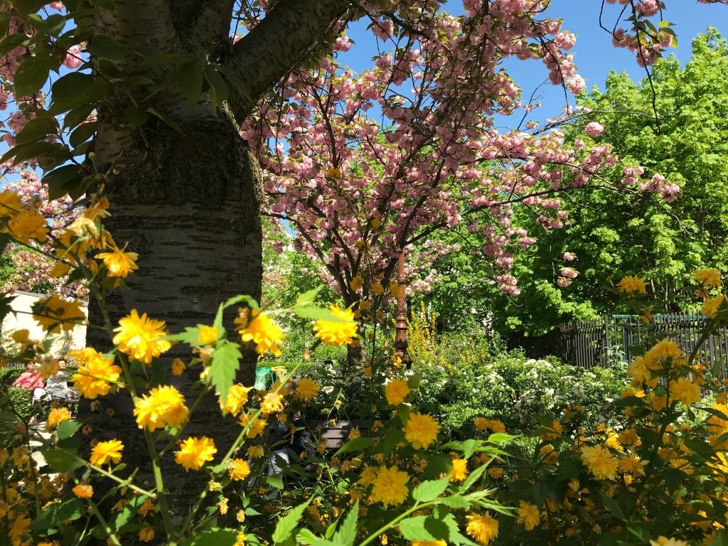 Square, rue des  Cloÿs : fleurs du printemps en été !