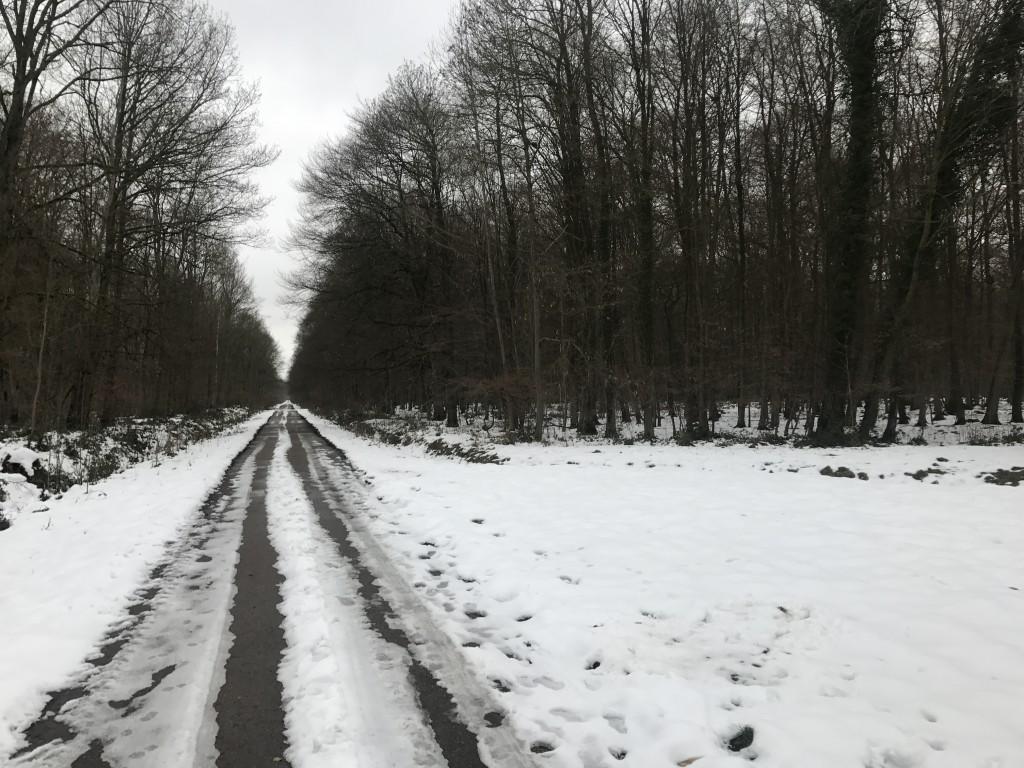Une neige tenace en foret de Marly (180m alt.)