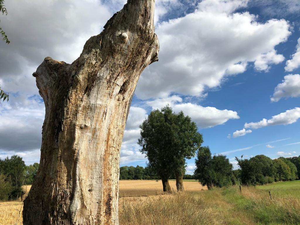 L'arbre mort et les nuages