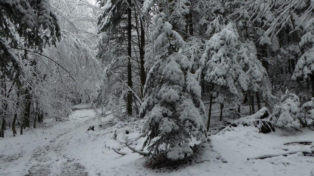 5 à 10cm de neige