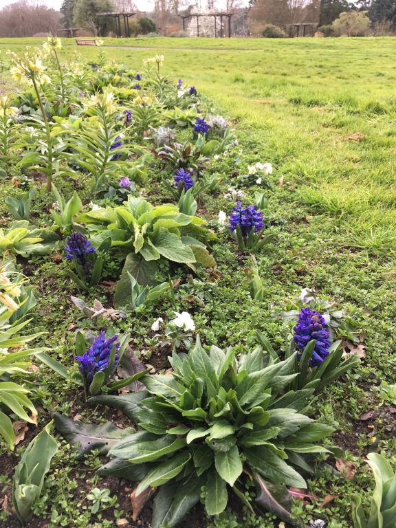 floraison printanière