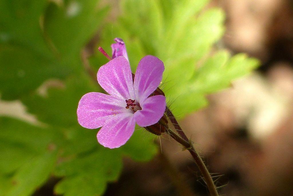 Petite fleur scintillante