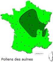 Image d'illustration pour Marronnier de Genève, printemps, pollens et allergies