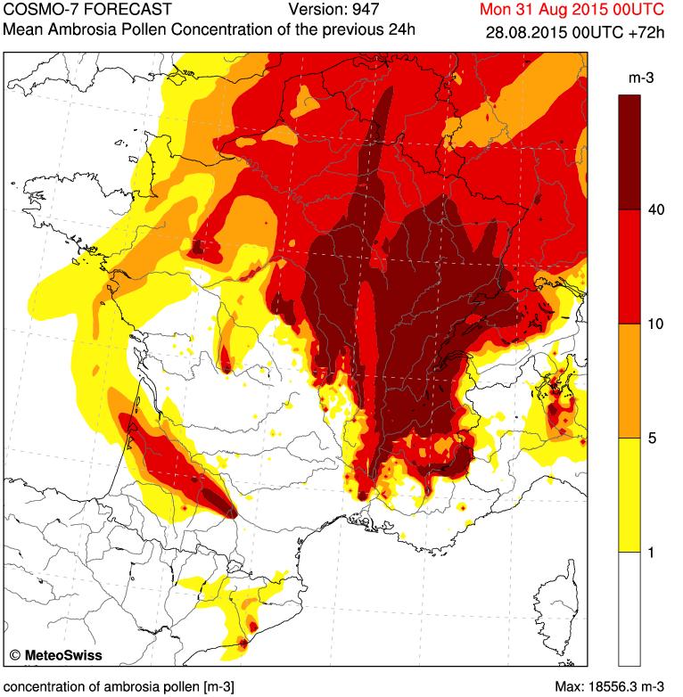 Image d'illustration pour Les pollens d'ambroisie provoquent encore des allergies