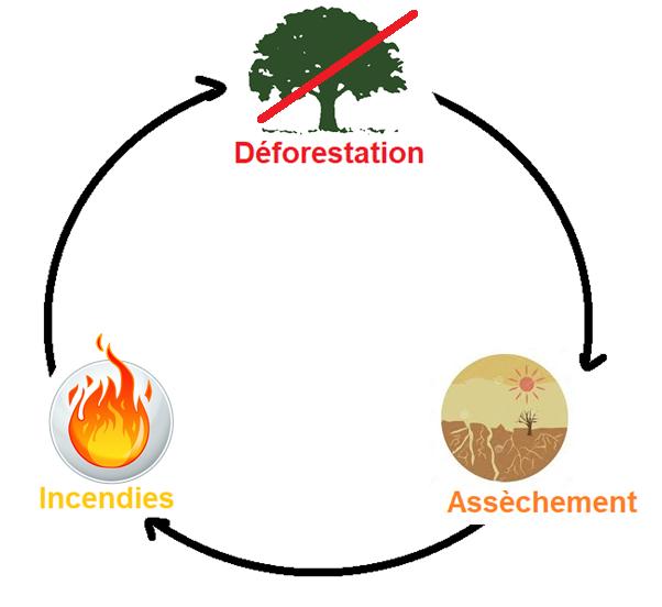 Image d'illustration pour Incendies en Amazonie, une catastrophe écologique mondiale en devenir