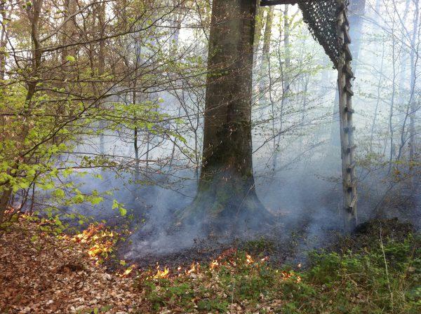 Image d'illustration pour Sécheresse et risque d'incendie au Luxembourg