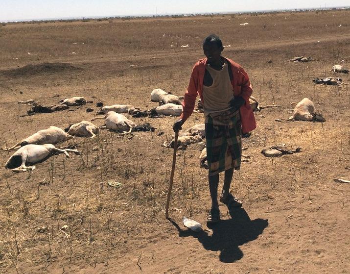 """Résultat de recherche d'images pour """"Somalie, bétail, sécheresse, Somalie, 2017 2018"""""""