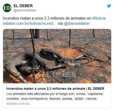 Image d'illustration pour Violents incendies en Bolivie