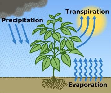 Image d'illustration pour Le risque de sécheresse se maintient malgré le temps perturbé